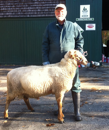 Maine Sheep Breeders Association - Classified Ads